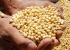 Safra de grãos no Brasil deve alcançar 300 milhões de toneladas em dez anos